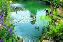 Natural Pools and Ponds / Natural pools, ponds, fountains and rain gutters. Creative ways to Incorporate water features into your garden and yard.