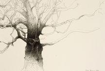 A beleza das árvores