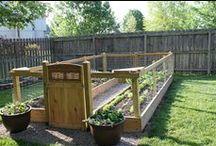 Gardening | Homesteading / by Jessica Miller