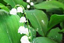 Flowers e Home decor / La natura,i miei e i vostri lavori tutto homemade