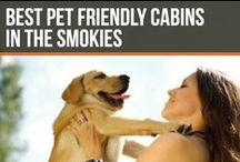 Best Pet Friendly Cabins in the Smokies / Don't want to leave your pet at home? We have cabins for you!