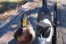 Our Borgo's friends :)