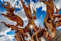 Fierce Nature / Beautiful photographs capturing wild nature, weather phenomena, violent or striking scenery.