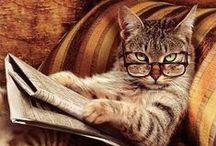 Cute! Fine Felines / Internet + cats, better than peanut butter + jelly? / by Jeena Howard