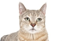 Cat Chat / Check out these interesting articles about cat facts and news. / by Cat Fancy