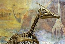 Fossils, Dinosaurs, and Other Ancient Artifacts / The Older the Better / by Linda Rommelaere
