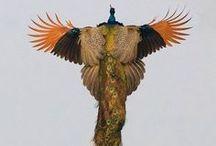 - Aves / Mis favoritas *u* Colección de Imágenes