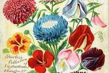 Vintage Flower Illustraion