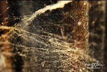 Bang-sabang / Bang Sabang ( dari bahasa Madura ) artinya sarang laba-laba.