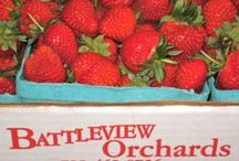 Strawberries! / Battleview Orchards own Jersey Fresh Strawberries....