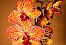Fleurs: Lotus - Lys - Orchidée