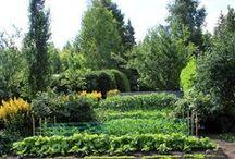 Puutarha / Kuvia omasta puutarhasta, hyöty- ja koristekasveista, sadonkorjuusta...
