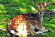 Valokuvaus / Luontoa, eläimiä, kasveja... Kuvat ovat kuvablogistani The Land Of Thousand Lakes.