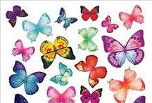 Perhosia ja Sudenkorentoja / Perhosia kaikenlaisia