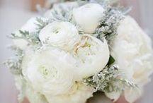 all white elegance
