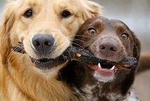 Friendship,love