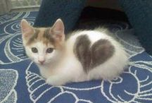 Pets With Beautiful Markings / Pets and other animals with beautiful or unusual markings that make you love them even more.