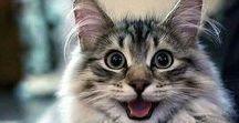 Cute pets/cats