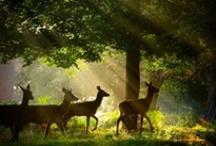 Animal Kingdom / by BiBi Blooms Free