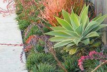The Petite Urban Garden / Garden spaces and plant selection for small urban environments