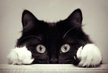 Kitty Pics / Beautiful pictures of beautiful felines.