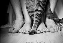 Cats / Because im a real catlady!