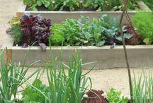 Garden and kitchen garden