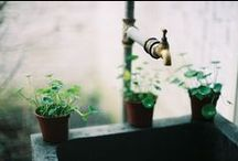 outside dreams / salainen puutarha, sielunleposija ja elvyttäjä/uusija :) näpertelyä ja lavastusta