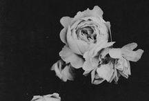 l' amour des fleurs