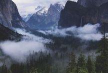 Vandalore Forest