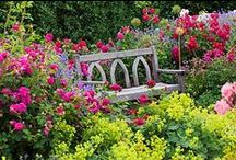 Garden Paradise / Collection of inspiring gardens.