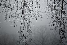 Monstrous / An idea board for my new Gothic romance/mystery novel.