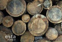 Il Legno / Il legno è vivo