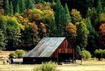 Fall Foliage in Plumas County / Fall color in the Sierra of Northeastern California. Plumas County / by Plumas County Tourism