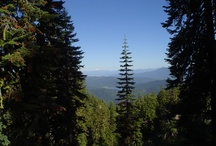 The Forests of Plumas County / by Plumas County Tourism Council