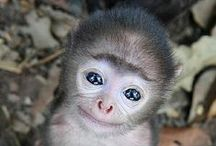 I Love Monkeys / by Tammy Marie