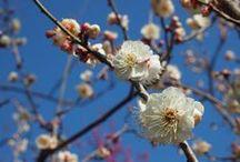 Flower / beautiful flowers