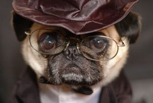 Pets in Specs / These adorable little critters are too cute not to re-pin!