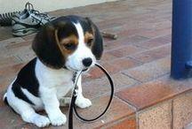 + Puppy Love +