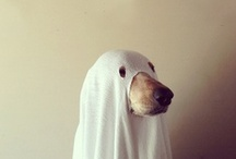 Dogs, unmasked.... / Wonderous and silly