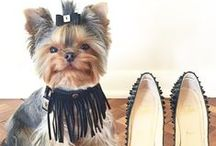 Best Dressed List / Our Favorite Pets in Our Favorite Clothes and Accessories!