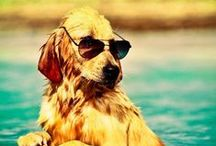 Summertime Pets / Sunny Days, Beaches, The Great Outdoors: These Pets Love It All.