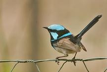 Birds / Vogelspotter-a-gogo.