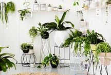 Plants for indoor / Trends of indoor plants