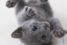 I ♡ CATS / Adorable pictures of cats and kittens