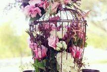 Flowers / Beautiful Flowers.