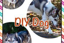 DIY Dog