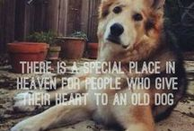 Old Dog Quotes / Share my love for senior dogs with these heartwarming old dog quotes.