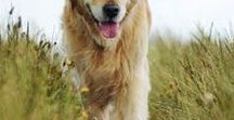 Senior Dog Care Tips / All the best senior dog advice you're looking for.