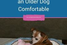 My Senior Dog Blog / The articles pinned here are all from my blog Caring For a Senior Dog. The website is filled with amazing senior dog advice and helpful tips.